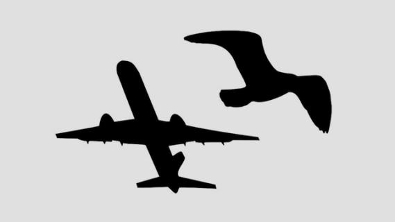Resource thumbnail: Silhouette of plane and bird